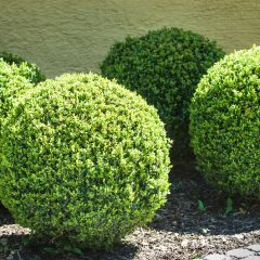 God's Evergreen Love