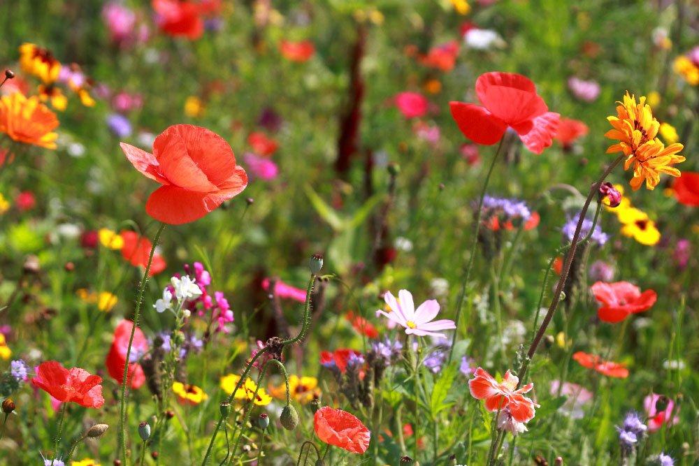 Gods Kingdom Is Like Field Of Wild Flowers